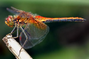 Tachinger See Chiemsee